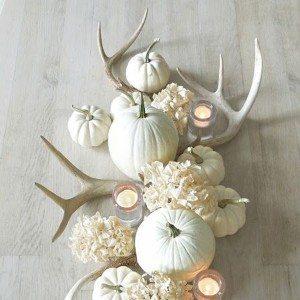 pumpkin-4-square